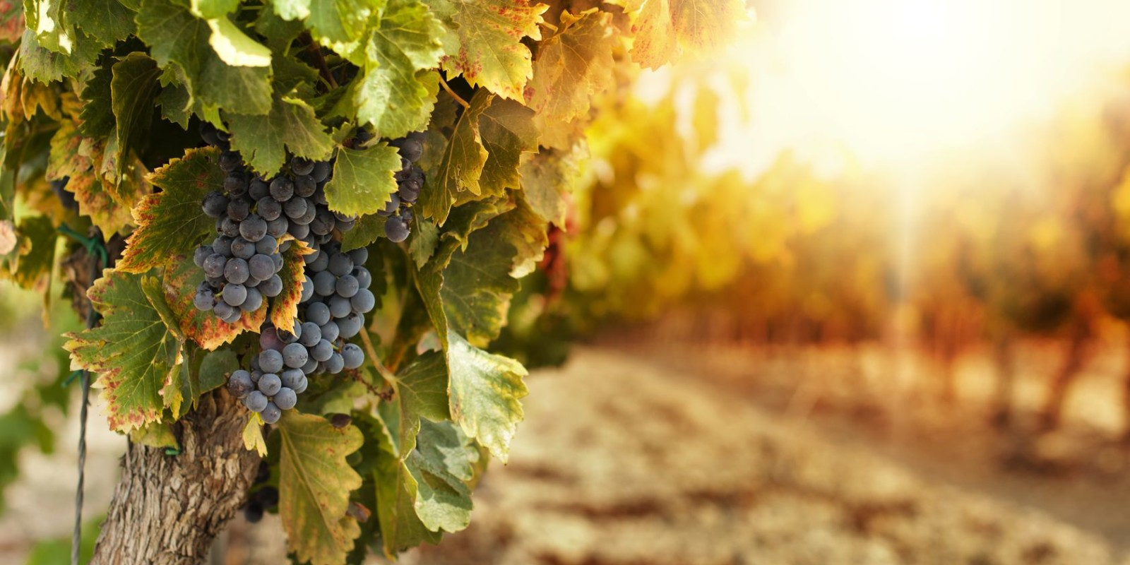 So You Want to Buy a Vineyard: Pre-Purchase Checklist